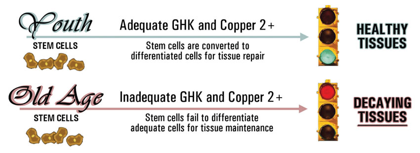 Copper and Stem Cells